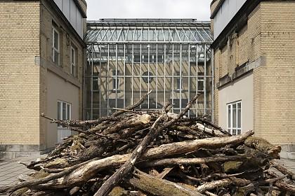 Totholz aus dem Steigerwald